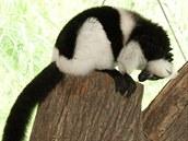 Spojov�n� vari b�lop�s�ch: sami�ka Fania si zna�kuje parkosy na polovin� v�b�hu...