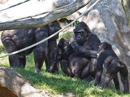 Idylka ve venkovním výběhu Pavilonu goril