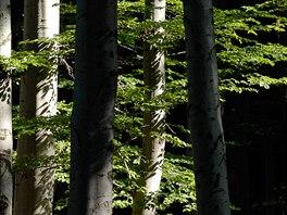 Na Malém i Velkém Blaníku najdeme zachovalé bukové lesy.