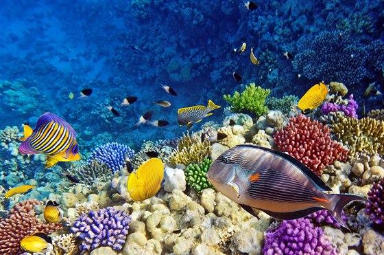 Na Hurghadě si užijí nádherný podmořský svět příznivci šnorchlování a potápění.