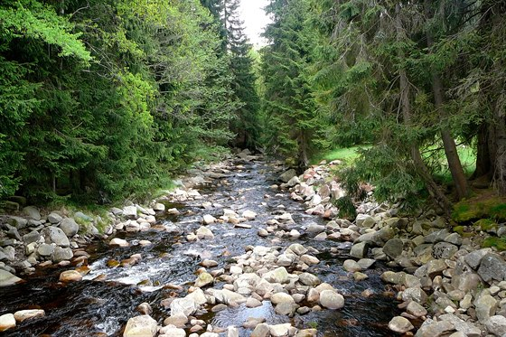 Rolava je na počátku dravá horská říčka, ale po pár kilometrech začne nádherně...