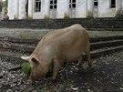 """Doba sovětského """"blahobytu"""" skončila, teď je na vesnici největším pokladem..."""