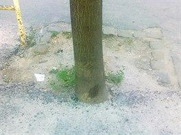 Stromy zalit� asfaltem p�ed �kolou v ulici Na Zl�chov� v pra�sk�ch Hlubo�ep�ch...