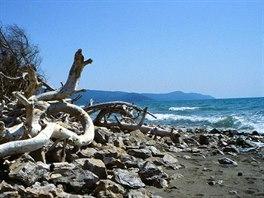 Vyplavené kmeny u Mariny di Alberese
