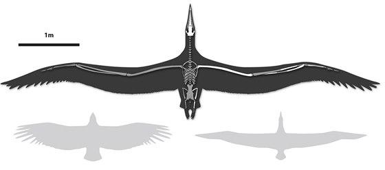 Pelagornis sandersi je patrně největším ptákem, který se kdy proletěl po