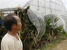 Mu� zabezpe�il sv� sklen�ky s mangem p�ed bl��c�m se tajfunem Neoguri v...