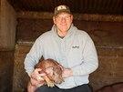 Americká likérka Templeton Rye chová prasata