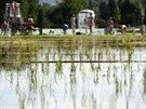 Přírodní koupaliště Biotop už má otevřeno (na snímku z 3. července).  V popředí...