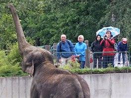 Sloní stádo je jedním z největších lákadel ostravské zoo.