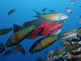 Peixes vaěrios, Madeira