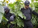 Ukrajinští horníci pátrají po černých skříňkách z malajsijského boeingu (18....