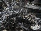 Ohořelé lidské ostatky v troskách malajsijského boeingu (18. července 2014)