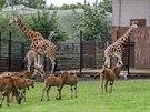 Zvířecí obyvatelé safari v ostravské zoo.