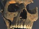 Lebka ženy ve věku 17 až 20 let na výstavě o znovuobjeveném hřbitově v centru...