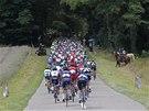 POD KLENBU STROMŮ. Peleton v jedenácté etapě Tour de France.