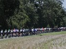 CYKLISTICKÝ HAD. Balík jezdců ve  dvanácté etapě Tour de France.