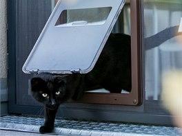 Dvířka si kočka snadno otevře ven i dovnitř.