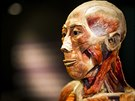 Svým rozsahem je tato výstava mrtvých těl nebo jejich částí zatím největší,...