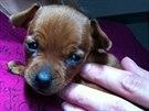 Štěňátko mělo podle veterinárního lékaře zhruba tři týdny