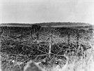 Zemi nikoho u francouzského města Ancerviller pokryly ostnaté dráty (25. dubna 1918).