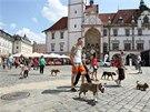 Pochod silných psů centrem Olomouce (26. 7. 2014).