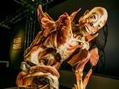 V Brně bude při výstavě Bodies Revealed ke zhlédnutí 230 exponátů.