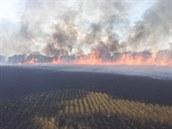Požár dvaceti hektarů obilného pole u obce Hubálov na Jičínsku (26. července...
