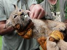 V brn�nsk� zoo absolvovala 31. �ervence prvn� veterin�rn� prohl�dku �ty��ata...