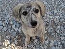 Afghánské štěně Míša, kterému čeští vojáci pomohli najít domov