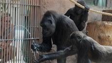 Ke Kijivu se p�idává i Kiburi a chytá vodu z hadice do dlan�.