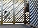 Ankhor po vypu�t�n� z�transportn�ho boxu, ve st�ji v�pavilonu slon� Zoo Praha.