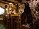 Vycpaný medvěd baribal v litomyšlské restauraci.