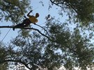 Arboristé v Praze soutěžili v lezení po stromech.