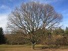 Jiráskův dub (významný strom) je cennou krajinou dominantou. Pojmenován je...