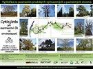 Mapka trasy první pražské stromojízdy