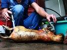Kuchař opéká kočku pomocí plynové svářečky. Hanoj, květen 2014.