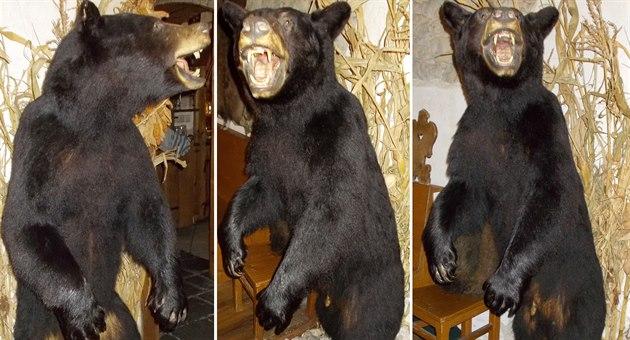 Vycpaný medv�d baribal, kterého p�i�li celníci zabavit do restaurace v...