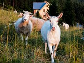 mini ZOO s kozami, ovcemi a prasátky