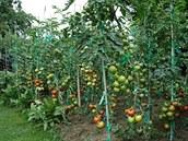 Raj�ata se letos povedly, v�t�í �ást úrody je�t� �eká na zpracování.