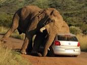 Incident se odehrál minulý týden v Národním parku Pilanesberg v Jihoafrické...