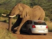Sloni často používají stromy a skály k tomu, aby se zbavili nepříjemného...
