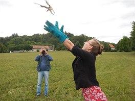 Když ptáci nabrali síly, mohli být vypuštěni do volné přírody.