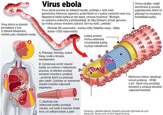 Co zp�sobuje virus ebola