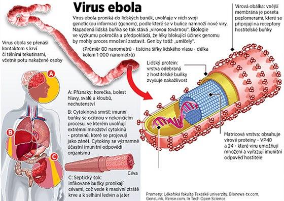Co způsobuje virus ebola