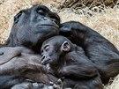 Nuru unavený ze všech svých lumpáren odpočívá v náruči své matky Kijivu.