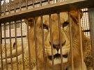 Lvi v Peru