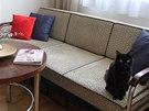 Kočičí slečna se už nechce dělit o své granule...