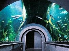 V Obřím akváriu budete mít nad hlavou 130 000 litrů vody