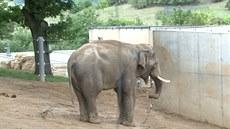 Nový slon