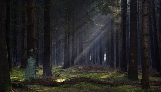 Les Bor v Branišově u Českých Budějovic patří k nejzáhadnějším místům Česka